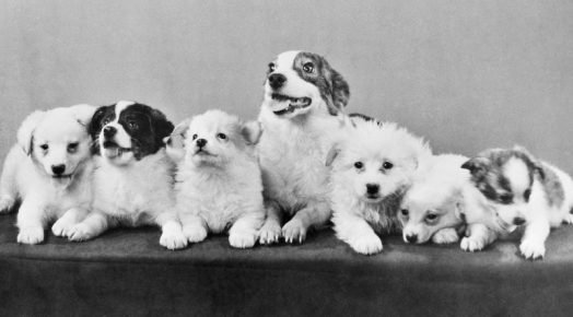 Стрелка со своими щенками