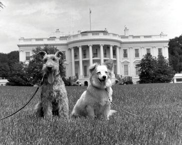 Чарли и Пушинка на лужайке у Белого дома