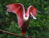 Экзотическая птица