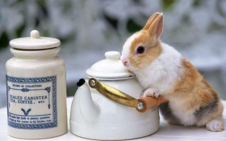 Кролик с чайником