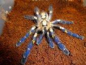 Красивый паук