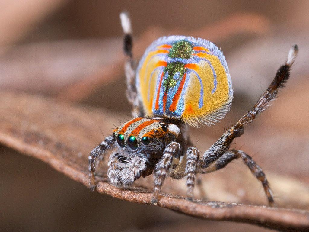 схема подойдёт пауки павлины фото пансионат, который расположен