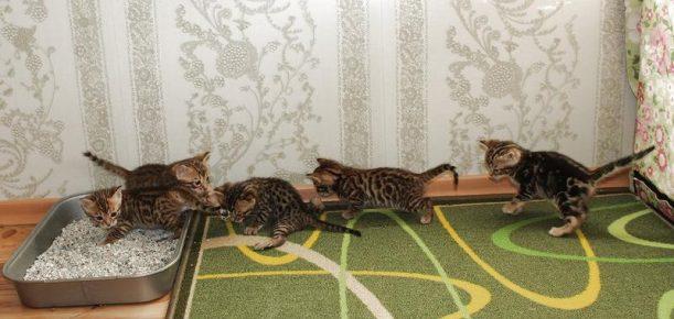 Котята бегут