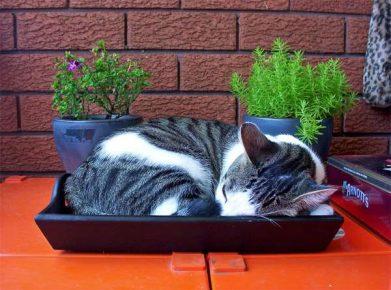 Кошка спит в лотке