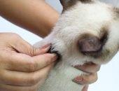 Кошку держат за загривок