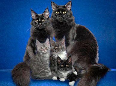 Кот, кошка и котята