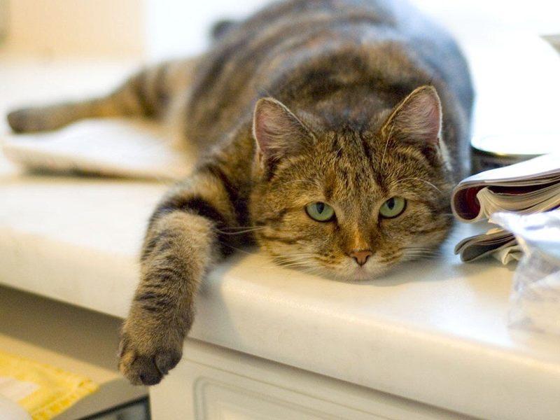 Кот не ест только пьет воду вялый