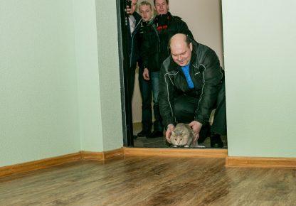 Кошку запускают в новую квартиру