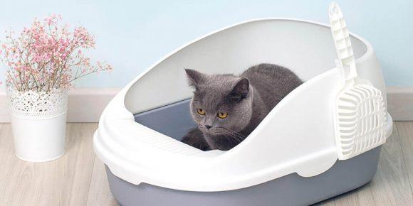 Кошка писает в лотке