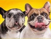 Две собаки на желтом фоне