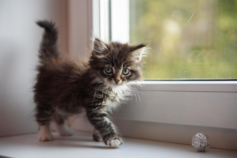 Метеоризм у котенка симптомы и лечение
