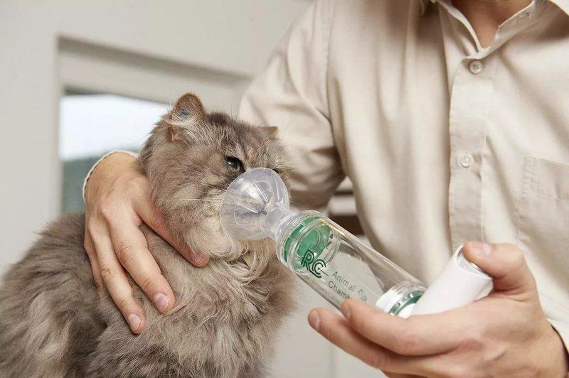 Сердечный кашель у кошек симптомы и лечение