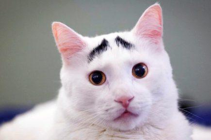 кот Сэм с бровями