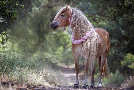 лошадь с длинными волосами