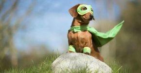 Собака-супергерой