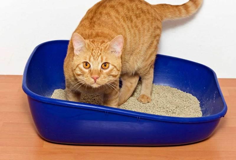 Уникальная трава марена красильная для лечения котов