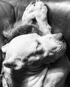 Фира спит