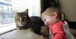 Джереми и его отважный кот