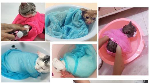 Коты в сетках для купания