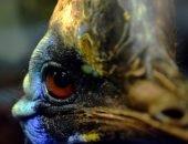 Опасная птица