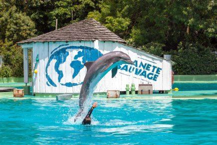 дельфинарий Planete Sauvage
