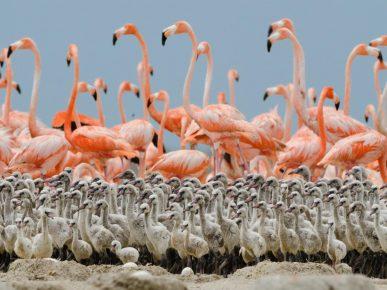Детский сад колонии фламинго