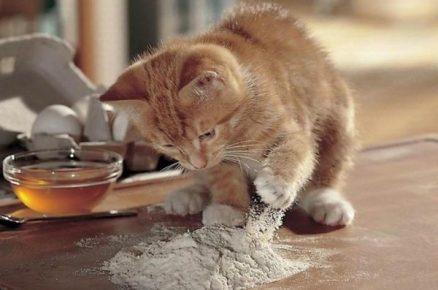 Котёнок играет с мукой