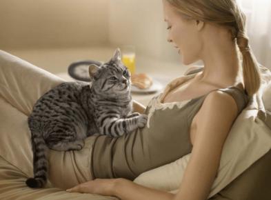 Кошка смотрит на девушку