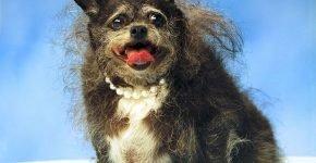 Некрасивая собака