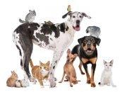 Много животных