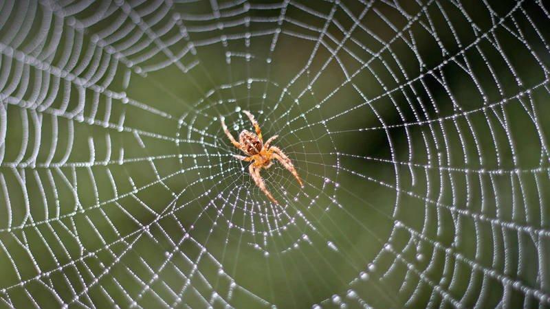 Как называется красный паук