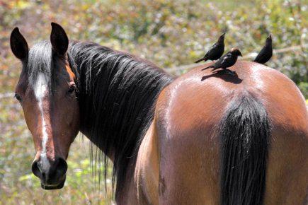 Вид лошади сзади