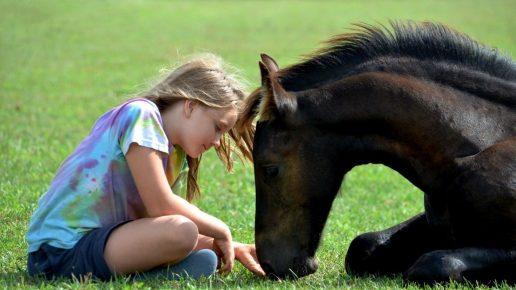 Лошадь и девочка