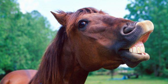 Лошадь с открытым ртом