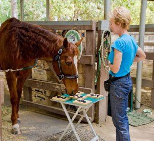 Лошадь выбирает карточки с цифрами