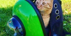 Рыжая кошка в рюкзаке с иллюминатором