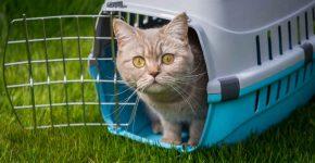 Кошка в пластиковом боксе