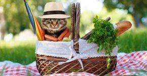 Кот на пикнике