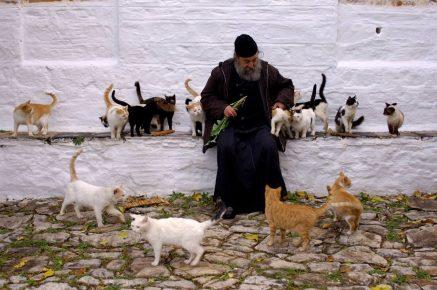 Монах и кошки