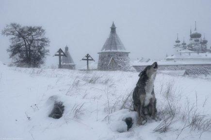 Собака у монастыря