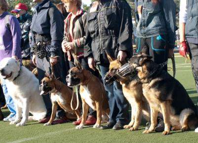 Собаки на дрессировке