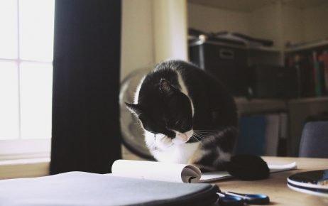 Чёрно-белый кот умывается на столе