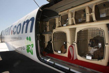 Отсек для животных в самолёте