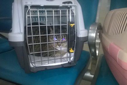 Кот в переноске в кресле самолёта