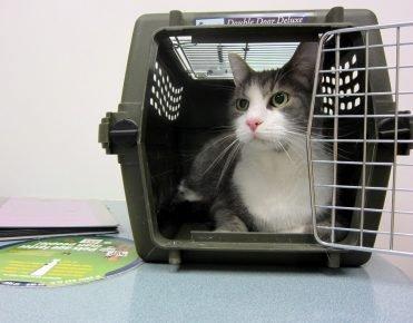 Кошка в контейнере