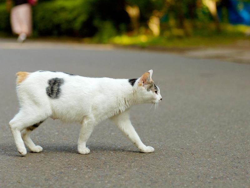 Если кошку сбила машина. Что делать?