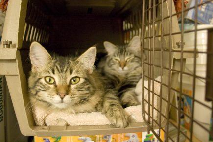 Кошка с котёнком в переноске
