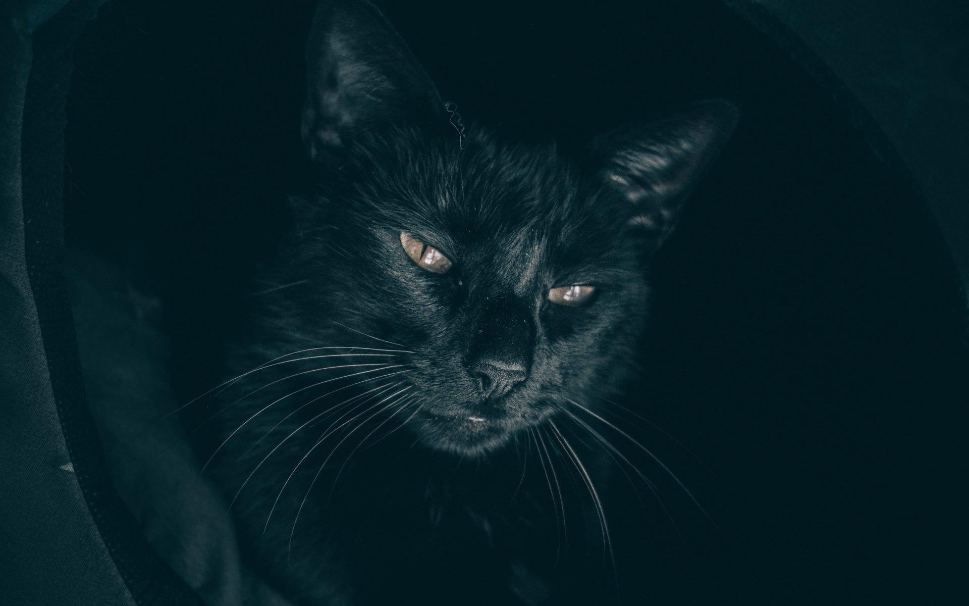 Открытки сайт, картинки злые кошки на рабочий стол