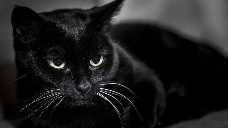 Черная кошка  приметы и суеверия