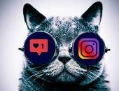Кот и инстаграм